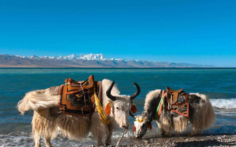 10 Days Xi'an to Lhasa and Heavenly Namtso Tour by Train