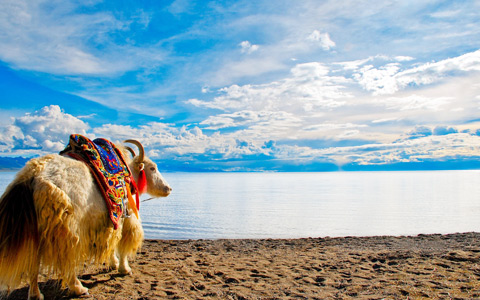 7 Days Join-in Tibet Train Tour from Xining to Lhasa with Holy Lake Namtso