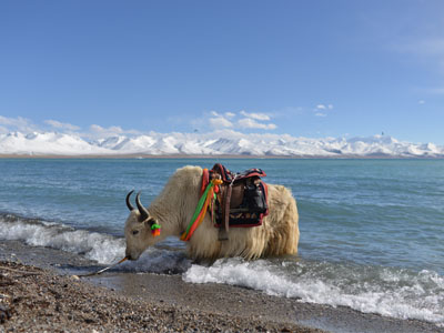 8 Days Lhasa Tour with Lhasa Valley and Namtso