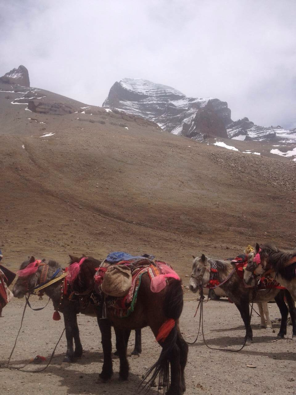 They use some horses to hold their packages because it's really a long way to trek around this holy mountain.